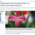La orquídea de la discordia.