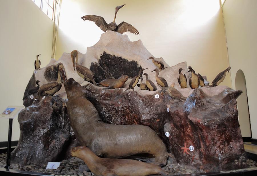 (FIG 2) [Fauna costera. Las salas en el MHN reúnen especies de todas las regiones del Perú.]