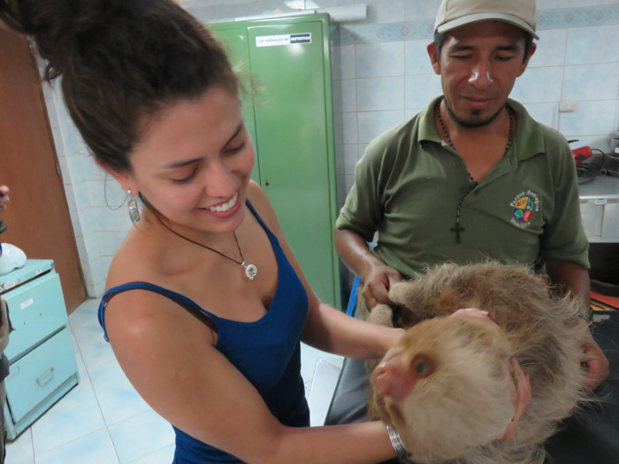 Julia Tejada con un perezoso de dos dedos en el zoológico de Huachipa. Su estudio sugiere que las ecuaciones para calcular dietas animales con el uso de isótopos de carbono son erradas. Foto: Rodolfo Salas.